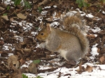 Cheeky little squirrel eating my peanuts