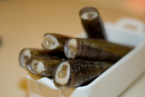 Razor clams, about to meet the frying pan