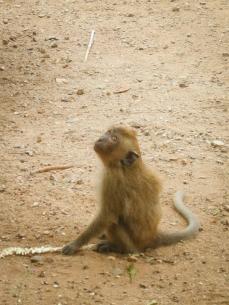 Stupid monkeys