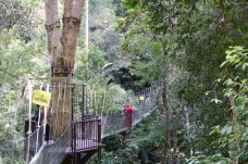 National Park tree tops walkway, Penang