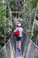 National Park tree tops walkway, Penang
